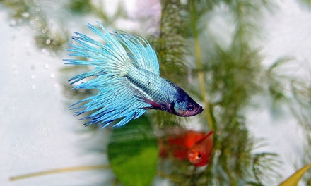 Pets, Supplies, or Betta Fish at Aqua World (Up to 58% Off). Three Options Available.