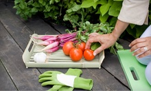 $49 for Two Four-Home Vegetable-Garden Classes at Garden Inspirations ($99 Value)