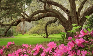 Admission And Tours At Magnolia Plantation & Gardens (up To 24% Off). Five Options Available.