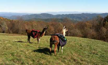 Image Placeholder For Visit 2 4 Or Up To 10 From Smoky Mountain Llama