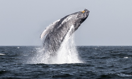 Four-Hour Whale- and Dolphin-Watching Cruise for One, Two, or Four from American Princess Cruises (Up to 45% Off)