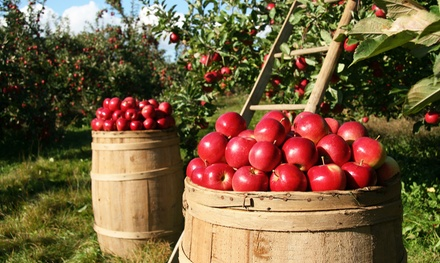 Apple Picking and Cornfield-Maze Outing for Two or Four at Ridgefield Farm (Up to 50% Off)