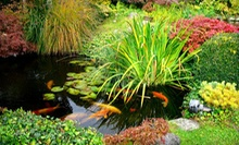 Plants, Garden, and Pond Supplies at Randy's Perennials &amp; Water Gardens (50% Off). 