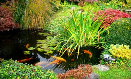 Plants, Garden, and Pond Supplies at Randy&#x27;s Perennials &amp; Water Gardens (50% Off). 