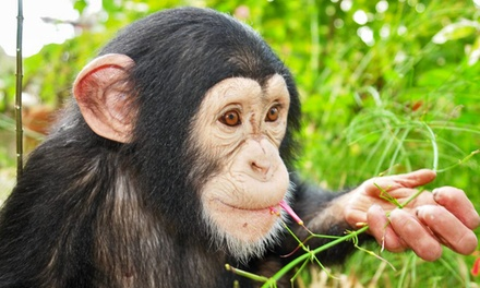 Monkey-Feeding Experience for Two or Four at Suncoast Primate Sanctuary (Up to 75% Off)