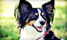 Three Nights of Dog Boarding or Two Days of Daycare at Downtown Doggie (Up to 52% Off)