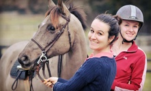One, Two, or Four 60-Minute Horseback-Riding Lessons from Karen E. Feeney, LLC in Marshall, VA (Up to 63% Off)