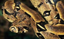 Little Ray's Reptile Zoo Hamilton Visit for Two or for a Family (Up to Half Off)