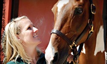 Four 45-Minute Horseback-Riding Lessons for an Adult or Child in a Heated Arena at Louw Stables ($140 Value)