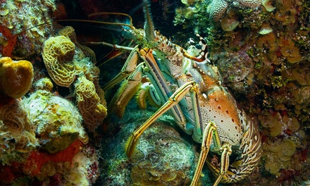 Two-Hour Lobster-Diving Tour for One or Two from La Jolla Water Sports (Up to 57% Off)