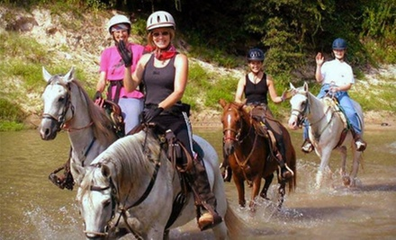 Trail-Ride Experience for Two, Four, or Six at Cypress Trails Equestrian Center (Up to 53% Off)