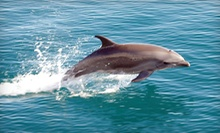 Dolphin-Watching Cruise from The Miss Florida Dolphin Cruise at The Wharf (Up to 55% Off). Three Options Available.
