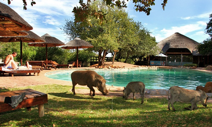 Mabalingwe Nature Reserve - Mabalingwe Nature Reserve: Bela-Bela: Stay for Two at Mabalingwe Nature Reserve