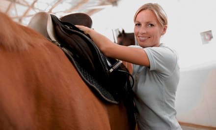 Two Intro Horseback-Riding Lessons and One Trail Ride for Two or Three at Ramey Riding Stables (Up to 54% Off)