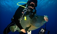 Open-Water PADI Certification Course or Confined-Water Scuba Course at Abyss Scuba & Travel (Up to 55% Off)