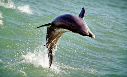 $12 for a Dolphin-Watching Speedboat Trip from Dolphin Racer Speed Boat (Up to $24.95 Value)