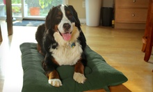 Furhaven Reversible Pet Pillow (Up to 63% Off). 6 Sizes Available. Free Shipping on Orders of $15 or More.