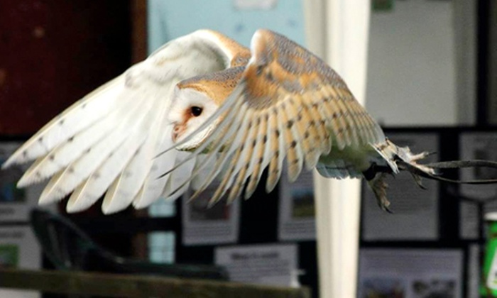 Gentleshaw Wildlife Centre - Eccleshall: One-Hour Bird Photography Experience from £14 at Gentleshaw Wildlife Centre (Up to 65% Off)