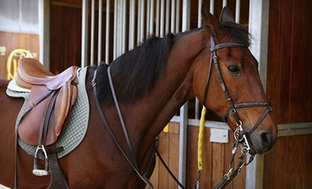 $22 for One 60-Minute Private Horseback-Riding Lesson at Rushlow's Arabians ($45 Value)