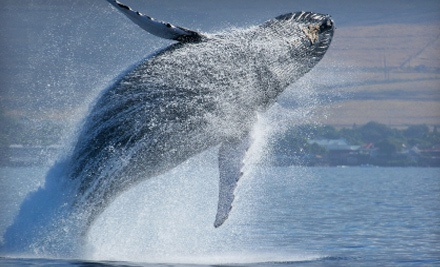 Whale-Watching Cruise Admission for Kid or Adult from First String Sportfishing (Up to 52% Off). Four Options.