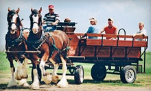 Carriage-Led Wine-Tasting Tour with Picnic Lunch for One, Two, or Four from Livermore Wine Carriage (Up to 58% Off)