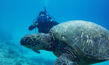 Scuba Excursions or Snorkel Scooter Tour from Ocean Legends (Up to 51% Off)