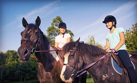 One or Four 90-Minute Beginners Group Horseback-Riding Lessons at RR Saddle Club (Up to 61% Off)