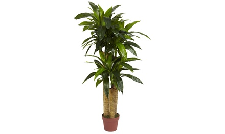 4ft. Cornstalk Real-Touch Dracaena Silk Plant