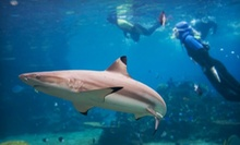 Two-Hour In-Water Shark Tour or Spearfishing Expedition for Two at La Jolla Water Sports (Up to 51% Off)