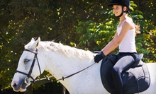 5 or 10 30-Minute Group Horseback-Riding Lessons at J.L.M. Equestrian (Up to 66% Off)