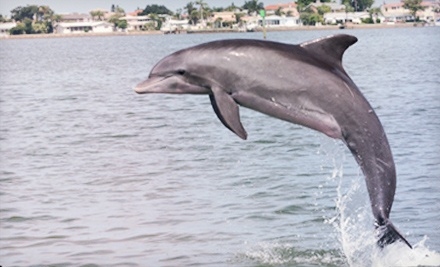 $16 for a 90-Minute Dolphin-Watching Cruise for Two Adults from Hubbard's Marina ($33.60 Value)