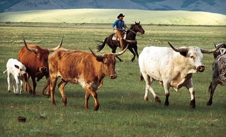 Half-Day Cattle Drive for Two or Four at Cherry Creek Lodge (Up to 54% Off)
