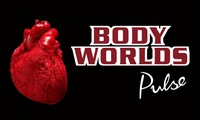 "GROUPON: ""Body Worlds\"" – Up to 46% Off Exhibit Yoga Awareness Month: \""Body Worlds: Pulse\"" & Yoga"