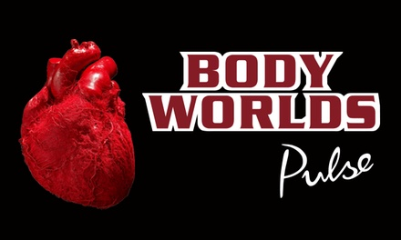 """Body Worlds: Pulse"" Human-Anatomy Exhibit at Discovery Times Square and Optional Yoga Class (Up to 46% Off)"