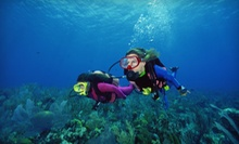 One-Hour Intro to Scuba Lesson, or Open Water Diver Scuba-Certification Training at Village Divers (Up to 68% Off)