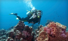 Discover Scuba or PADI Diving Class with Certification and Rental Equipment at Underseas Scuba Center (Up to 53% Off)