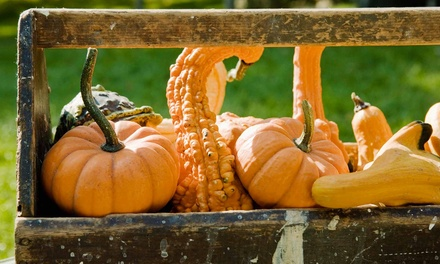 Fall Activities for Two or Four at Berryland Farms of Texas (44% Off)