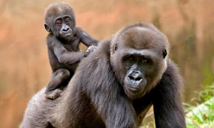 $25 for Admission for Two to Zoo Atlanta (Up to $45.98 Value)