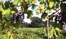 Wine-Tasting Package for Two or Four at Vizzini Farms Winery (Up to 55% Off)