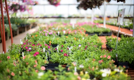 $25 for $50 Worth of Baskets, Annuals, Flats, and Pouches at Dumfries Nursery & Garden Center