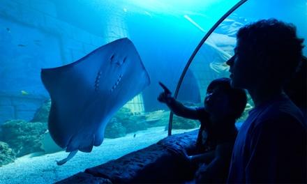 SEA LIFE Porto - Um mar de diversão por apenas 4,90€ para criança e 7,50€ para adulto