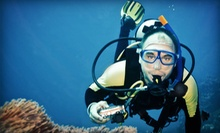 90-Minute Discover Scuba Class or PADI Full Open-Water Scuba-Certification Course at Got Air Scuba (Up to 67% Off)