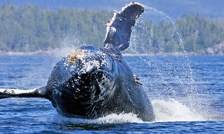 Whale-Watching or Hot Springs Tour from Jamie's Whaling Station - Tofino & Ucluelet (Up to 45% Off)