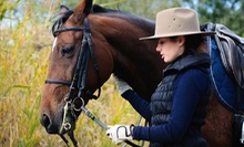 Four 30- or 60-Minute Horseback-Riding Lessons at Effervescent Arabians (Up to 55% Off)