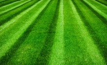 Up to 6,000 Sq. Ft. of Lawn Aeration, Seeding, or Both from Growing Green (Up to 57% Off)