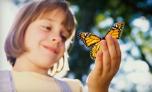 Butterfly-Sanctuary Visit for 2 or 4 or Birthday Party for Up to 10 at The Butterfly Charities (Up to 51% Off)