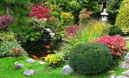 $28 for $50 Toward Trees, Shrubs, or Perennials at Maidstone Tree Farm & Garden Centre