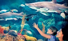 Admission for Two or Four to Summer Fun Nights at The Florida Aquarium (Up to Half Off)
