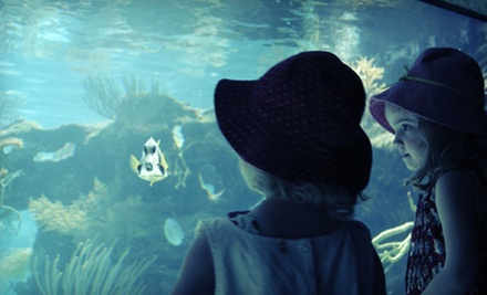 Half-Day Camp for One or Two or Full-Day Scientist in Action Camp for One or Two at World Aquarium (Up to 63% Off)