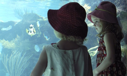 Day Camp or Tour at World Aquarium (Up to 71% Off)